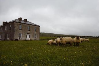 craggy-island-lamb